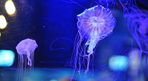 Nausicaa et ses petits poissons